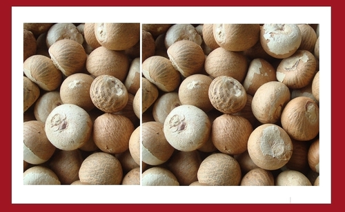 Whole Dried Betel Nuts