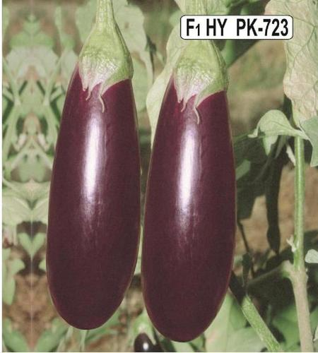 Brinjal(PK-723)