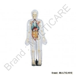 Model of Transparent Human ( Tall 85 cm)