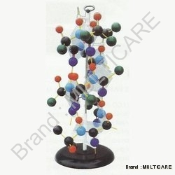 Protein Structure ( Tall 70 Cm)