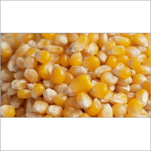Protein Maize