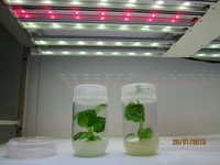 Plant Grow LED Light