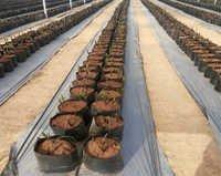 Grow Bag System