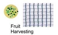 FRUIT HARVESTING