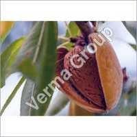 Almond Oil Virgin Carrier Oil