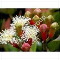 Therapeutic Clove Bud oil