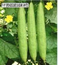 Sponge Guard Seeds