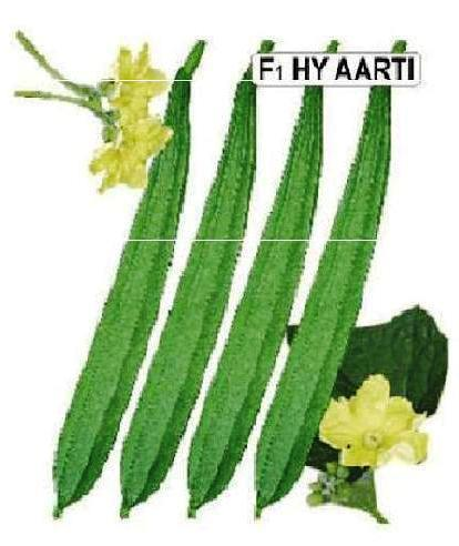 Ridge Gourd Aarti Seeds