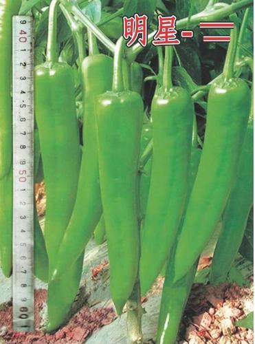 Chiilies Seeds
