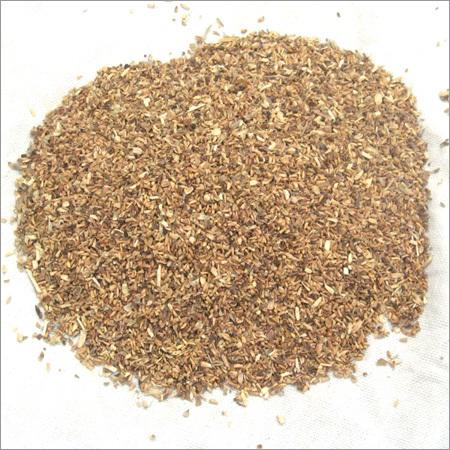 Kasni Seed
