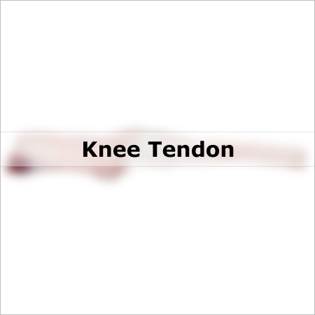 Knee Tendon Meat