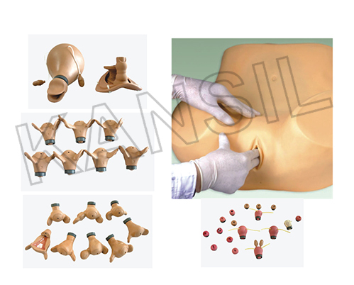 Advanced Gynecological Training Simulator Model