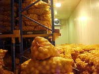 ONION COLD STORAGE