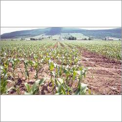 Generic Organic Herbicide