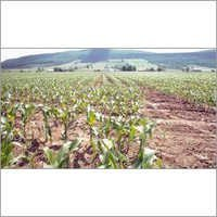 Generic Herbicide