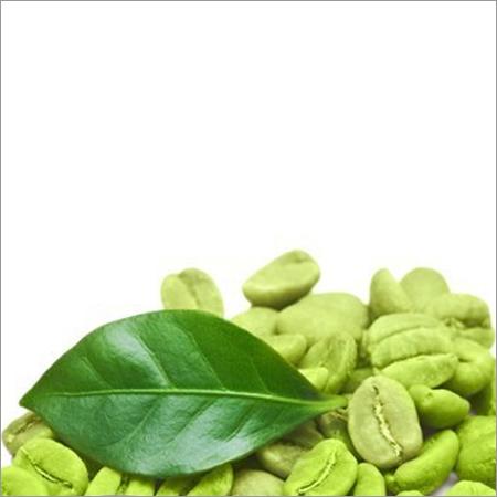 Hyoscinen-Butyl Bromide(Duboisialeaves)  Chlorogenicacid(Coffee Beans)