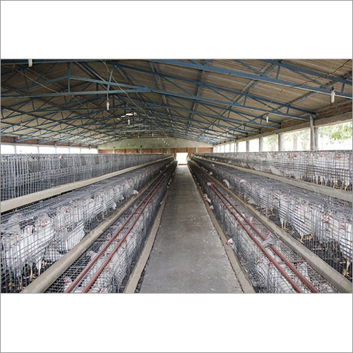 Chicks Cage System