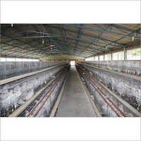 Chicks Cage System