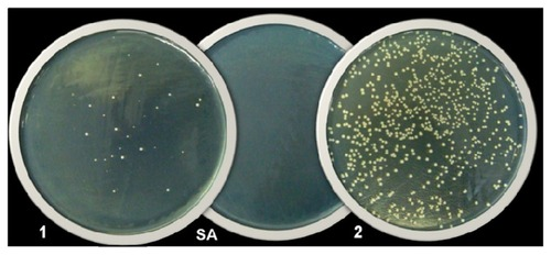 Antibacterial Test On Materials Testing Services