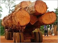 Tropical Timber Logs