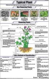Typical Plant Chart