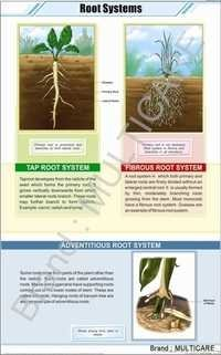 Root Systems Chart