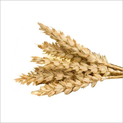 WA Plus Wheat Improver