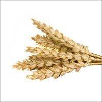 L-cysteine Flour Improver