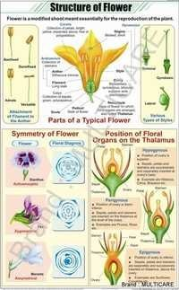 Structure Of Flower Chart