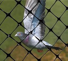 Anti Bird Control Net