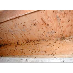 Pest Control For Ant