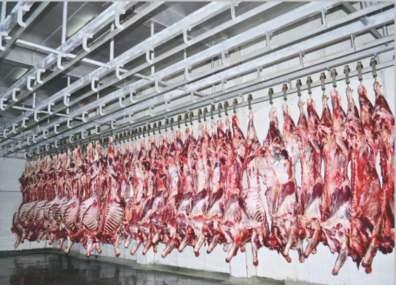 Carcass Chiller Line