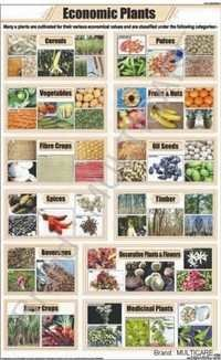 Economic Plants Chart