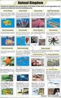 Animal Kingdom Chart