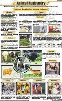 Animal Husbandry Chart