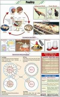 Poultry Chart