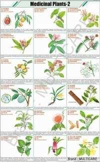 Medicinal Plants Chart  -2