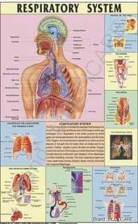 Respiratory System Chart