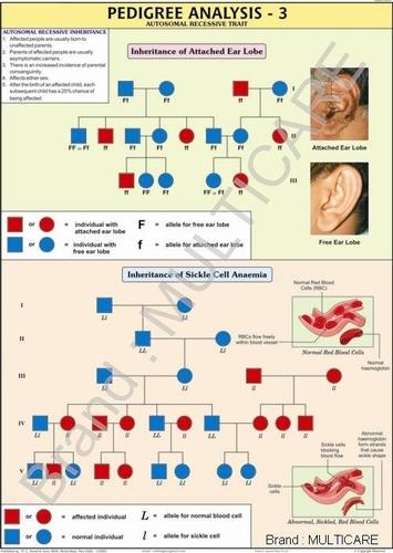Pedigree Analysis Chart -3