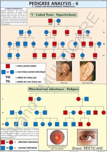 Pedigree Analysis Chart -6