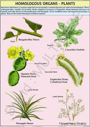Homologous Organs – Plants Chart
