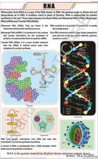 RNA Chart