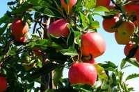 Agro Bio Chemicals