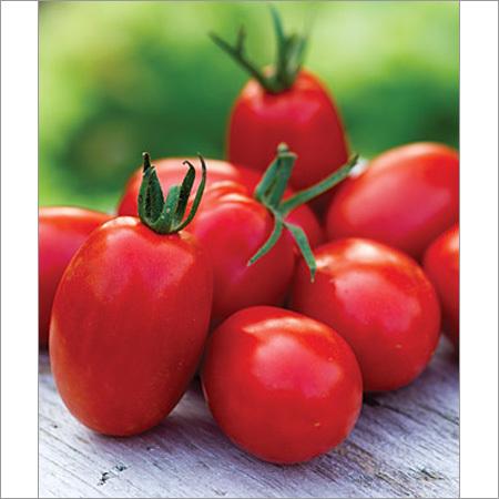 Tomato Seeds F1