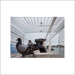 Bird Protection Service