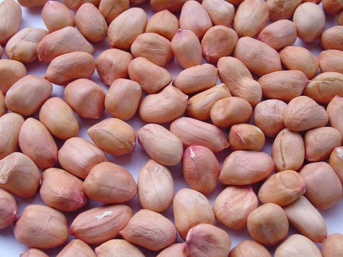 Indian Nuts