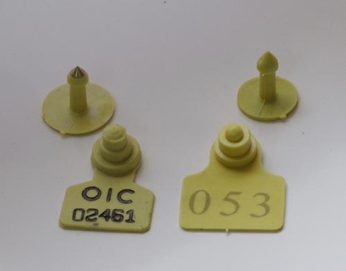Plastic Ear Tags
