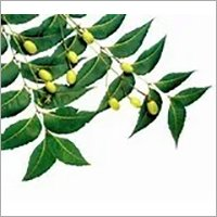 Neem Oil (cold press)