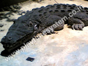 FRP Animal - Crocodile