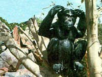 FRP Animal - Chimpanjee
